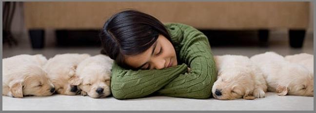 Golden Retriever Puppy Temperament 2