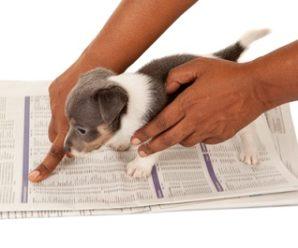 Paper Training Golden Retriever Puppies