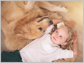 Rocky Mountain Spotted Fever in golden retriever-2