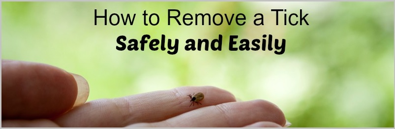 how to remove a tick from a dog step by step
